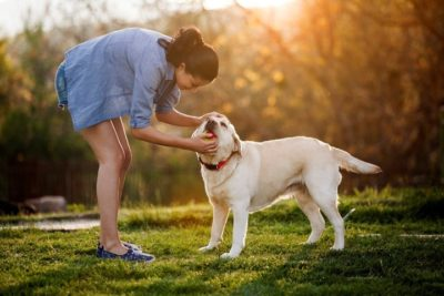 How to educate better to dog? Important training tips and tricks
